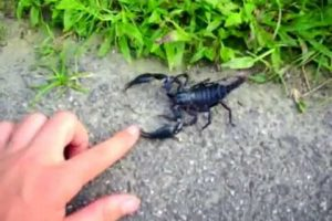 Wazifa For Scorpion Sting Bite